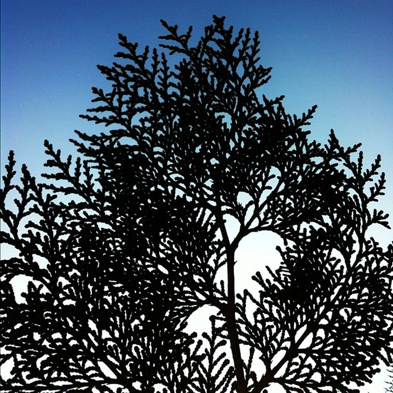 clear sky, silhouette, low angle view, no people, tree, growth, nature, outdoors, day, sky, beauty in nature