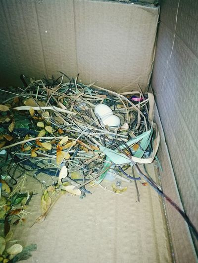 Balcony Pigeon Nest Check This Out Enfieldtown Birds