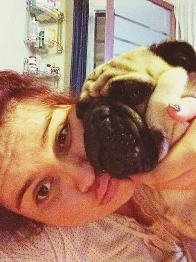 ❤️? Pequeño Frank Ilovepugs Pug Life ❤ Pug Love Pug Life  Pug Doglover Love