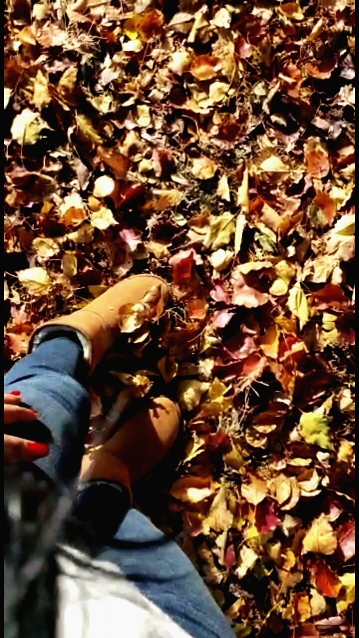 LOW SECTION OF PERSON WITH LEAVES ON AUTUMN DURING