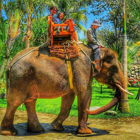 This was taken in Bali in 2012. I'm clearing up my album in my phone to make way for more pictures 😀 ✨Have a good day everyone ✨ Nature Naturelover Travel Elephant Bali Throwback Tb Love Beautiful Picture Ig_today Natureaddict Memories Animal Insta Instagram Igaddict Ig_week Igers Rsa_nature Amazing Ig_myshot Likes Ig_daily Awesome loveit worldbestgram insta_worldz ig_week holiday