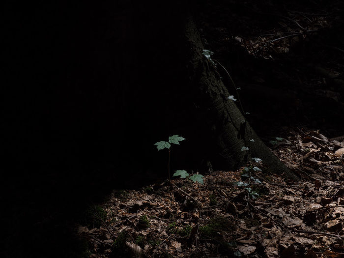 Erpeler Ley - way up and view Erpeler Ley Nature Tree Trunk Beauty In Nature Copy Space Dark Dark Background Day Forest Growth High Angle View Land Leaf Light And Shadow Nature No People Outdoors Plant Plant Part Tranquility Tree Tree Trunk