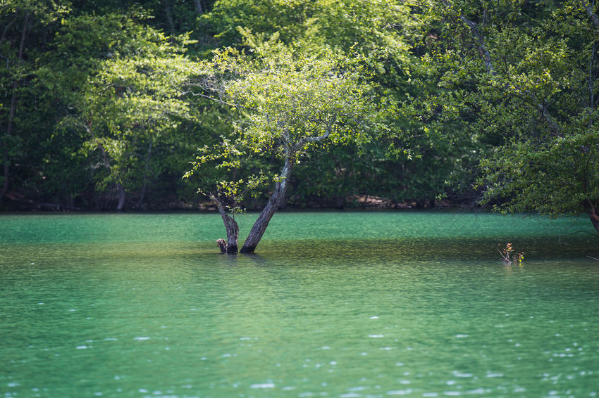 Forest High Water Level Lake Lakeshore Light And Shadow Nature Outdoors Reflection Relaxing Moments Rippled Riverbank Standing Water Summer Tranquil Scene Tree Tropical Climate Underwater Vacations Water Waterfront Weekend Activities