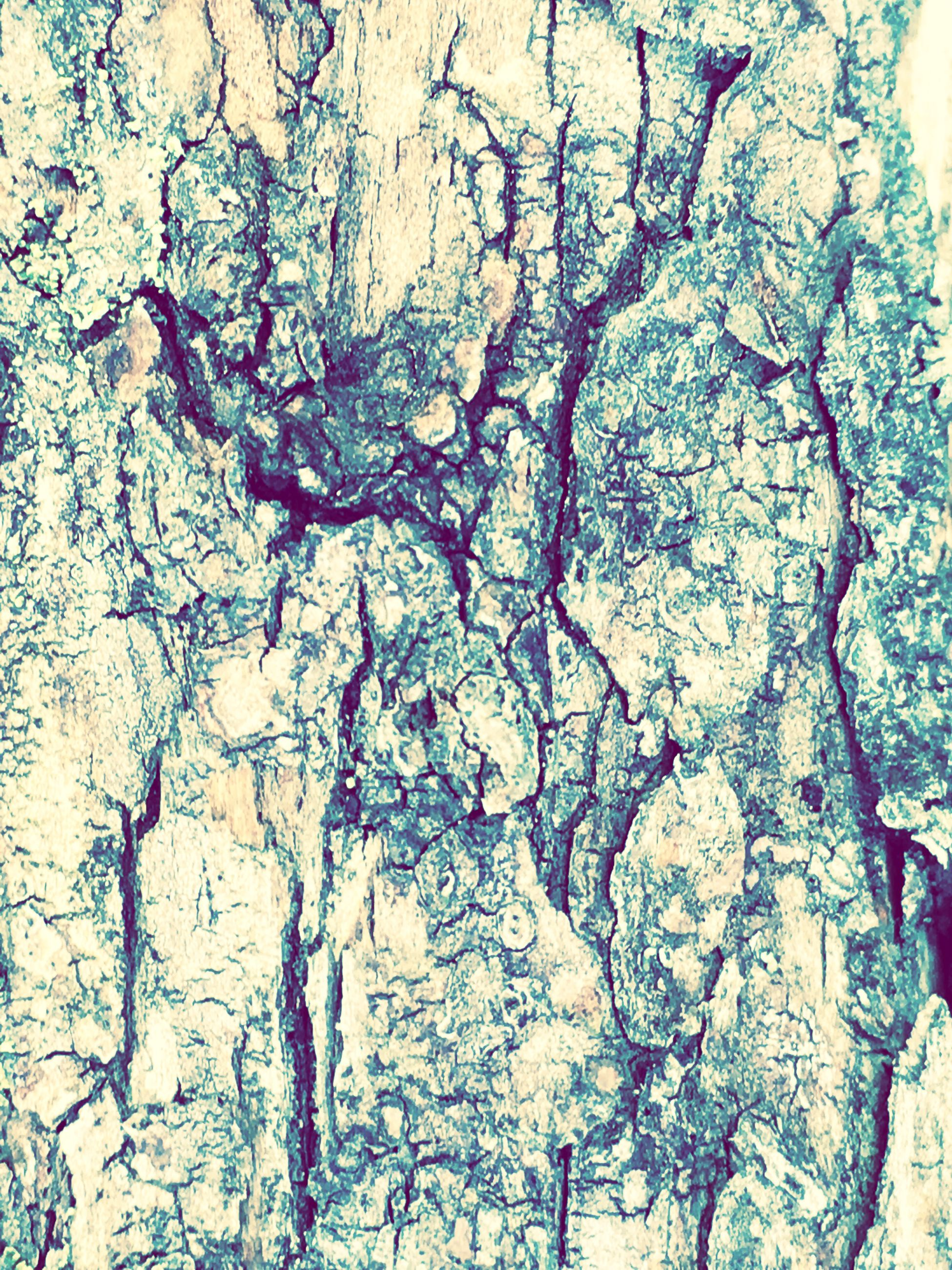full frame, backgrounds, close-up, no people, textured, day, nature, outdoors, tree, fragility, frosted glass, architecture