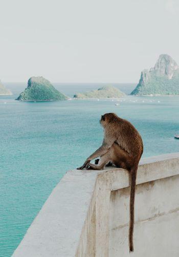 Mokeys Alone