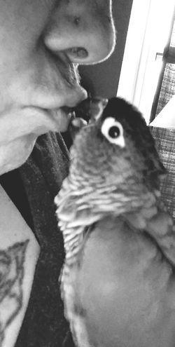 Loveis Mommasbaby Birdiekisses Greencheekconure
