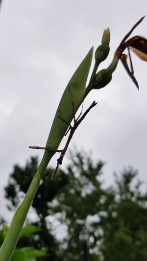 Stick Bug Backgrounds Hanging Out Insect Photography Insect