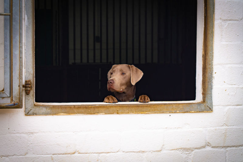 Dog looking through window of house