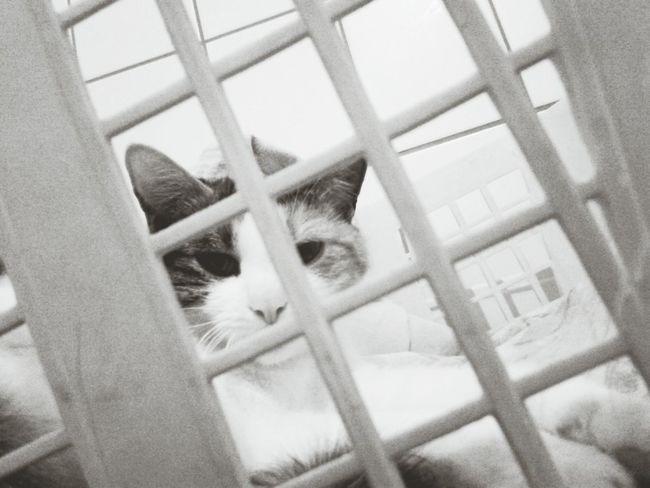 Ilovemycat Cats Of EyeEm Katze Showcase: November Schwarzweiß Bei Mir Zu Hause Cat♡ lilli💋