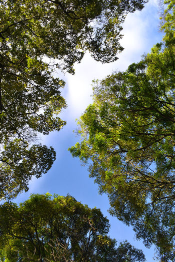 Bogotá Colombia Colors EyeEm Nature Lover Adventure Beauty In Nature Blue Sky Colombia ♥  Color Colorful Day Forest Green Growth High Hope Leaf Low Angle View Nature No People Outdoors Scenics Sky Tranquility Tree
