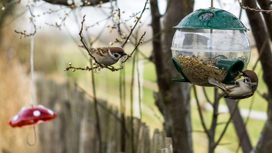 Feeding Animals SUPPORT Animal Themes Animal Wildlife Animals In The Wild Bird Bird Feeder Close-up Day Feeding The Birds Focus On Foreground Food Garden Hanging Helping Animals Nature No People One Animal Outdoors Perching Red Mushroom Springtime