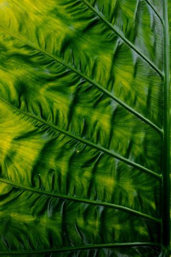 low key leaf,