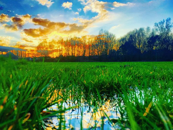 Colorful and dramatic sunset reflected in the water of a puddle in the meadows Plant Sky Tranquility Beauty In Nature Growth Tranquil Scene Cloud - Sky Scenics - Nature Green Color Land Field Nature Landscape Grass Tree Agriculture Environment Sunset No People Rural Scene