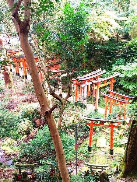 Ultimate Japan Japonesegarden Temple Gate