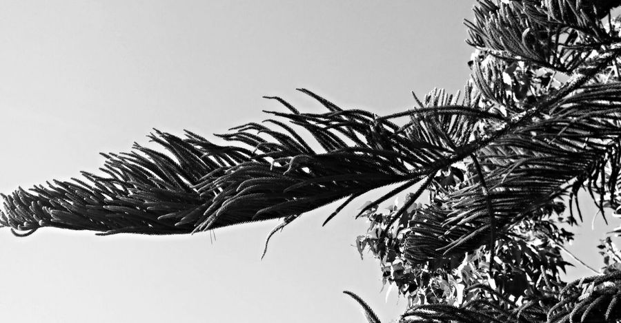 Bnw_friday_eyeemchallenge Feel The Wind Santa Ana Winds Spreads From My Point Of View