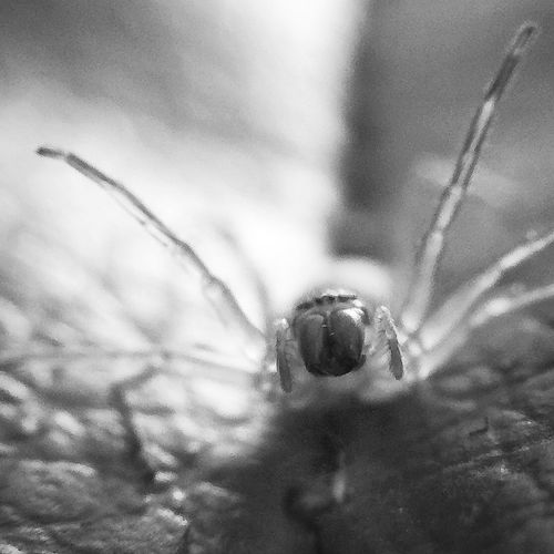 The Moment - 2015 EyeEm Awards Closeup Spider Macro Onlymobilephoto IPhoneography Capture The Moment