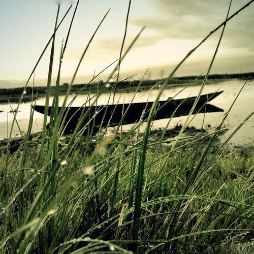 Grassland.. Macx Mobile Mobilephotography Grass Boats⛵️ Sunrise Toned