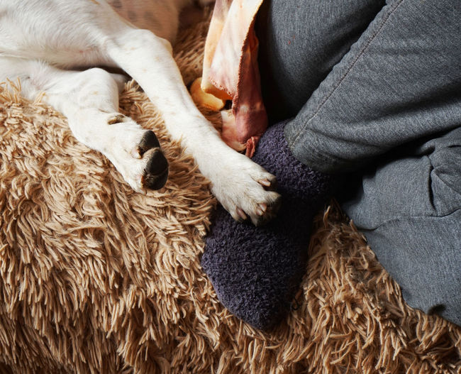 Low Section Of Person With Dog On Sofa At Home