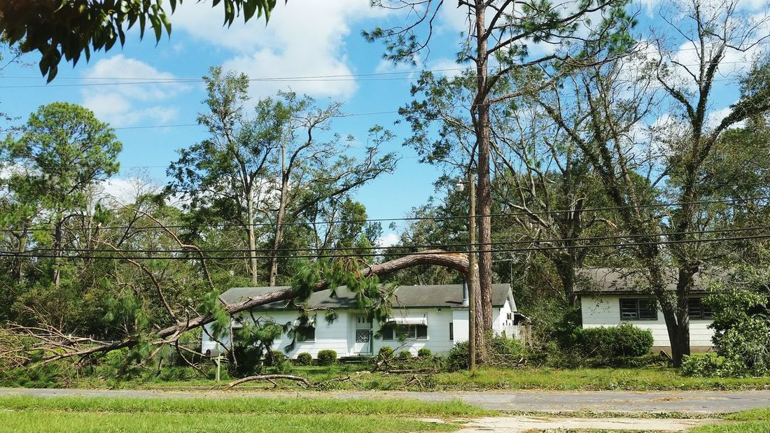 • Hurricane Michael • Georgia Fallen Tree Building Hurricane Michael 2018 Destruction Storm Damage Extreme Weather Hurricane Nature Wind Damage Hurricane Damage Hurricane Season  Hurricane - Storm Emergencies And Disasters