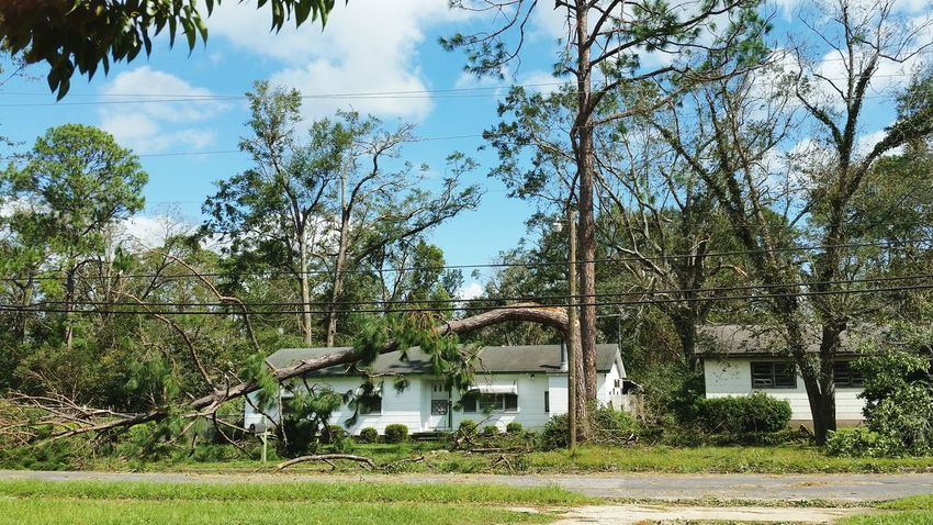 • Hurricane Michael • Hurricane Michael 2018 Destruction Storm Damage Extreme Weather Wind Flying Debris Weather Storm Leaves Hurricane Nature Wind Damage Hurricane Damage Hurricane Season  Alabama Hurricane - Storm Emergencies And Disasters