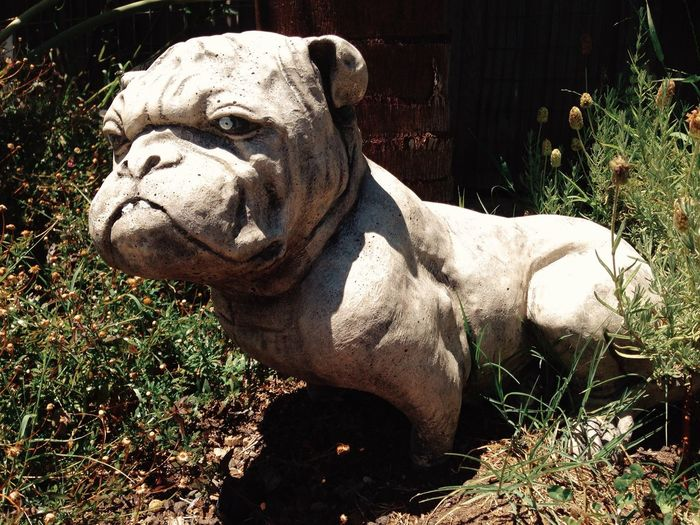 Garden Back Yard Stone Dog Melbourne