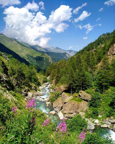 Mountain Nature Cloud - Sky Mountain Range Beauty In Nature Forest Outdoors No People Travel Destinations Summer Vacations Green Color Tree Sky Tranquility Landscape Montagna Mountains Valpellice Bobbiopellice Fiori Flowers Fiume River View
