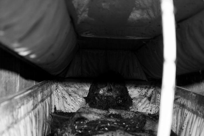 Blackandwhite Cementery Coffin Dead Person Last Photo Rip Skeleton The Photojournalist - 2017 EyeEm Awards First Eyeem Photo