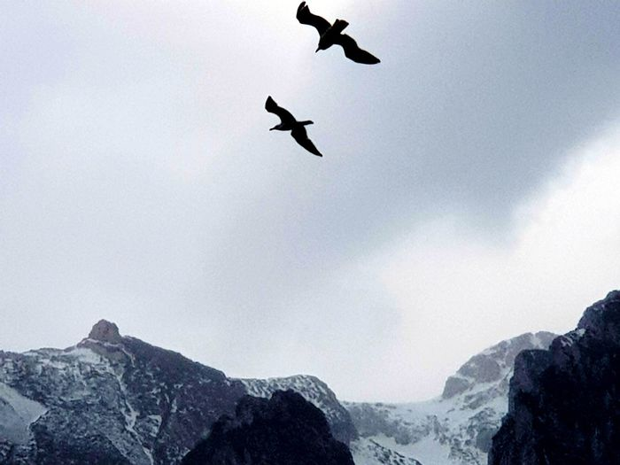 Low angle view of birds flying over mountain against sky