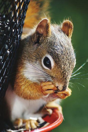 Close-Up Of Squirrel By Bird Feeder