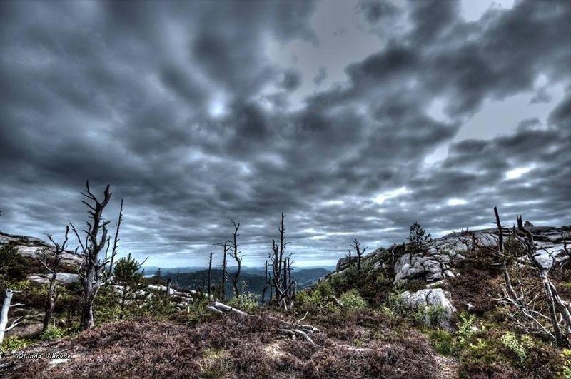 TreePorn Cloud_collection  Landscape_Collection EyeEm Best Shots - Landscape