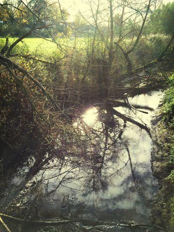 Walking Around Sunshine Reflections