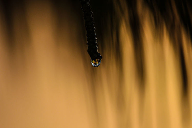 one drop Beauty In Nature Close-up Day Drop Fragility Freshness Indoors  No People Photography Water