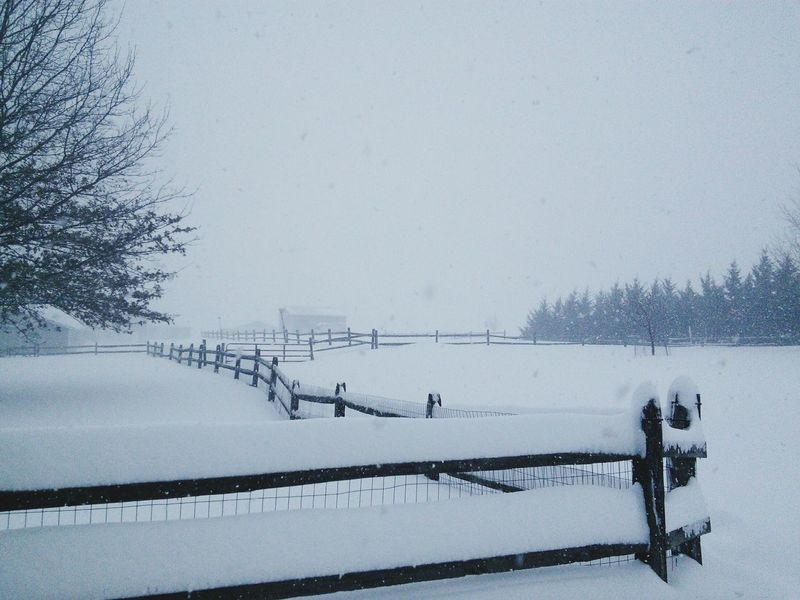 Snow on Ranch in Damascus, MD. Snow Snow ❄ Snow Day Snowy Snow Covered Fence Fences Feild Snowy Fields Gray Sky Gray Skies Snow❄⛄ Snowflake Trees Snow Covered Trees Snow Covered Landscape Horses Ranch Farm Snowzilla Maryland Damascus