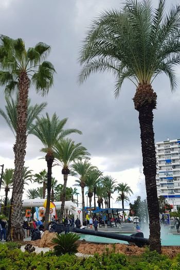 Las palmeras Port Puerto Sea Autumn Autumn colors Palmes Palm Tree Palmeras🌴 Palmeras SPAIN Ibiza Ibiza, Spain Sky Clouds And Sky Rainy Days Rainy Season Fuente Rain Holiday Travel Travel Destinations Travel Destinations Traveling Travellers Travellover Weekend Daysoff