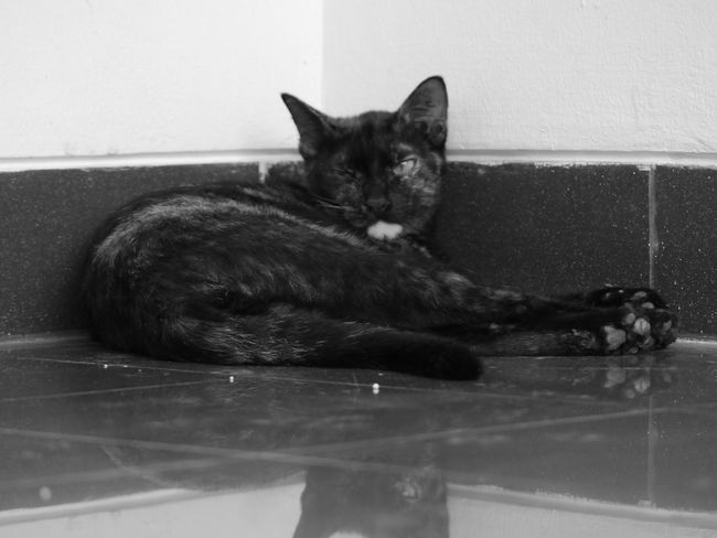 Domestic Cat Pets Indoors  Domestic Animals Feline Looking At Camera Mammal One Animal Animal Themes Portrait No People Day Lumix Blackandwhite