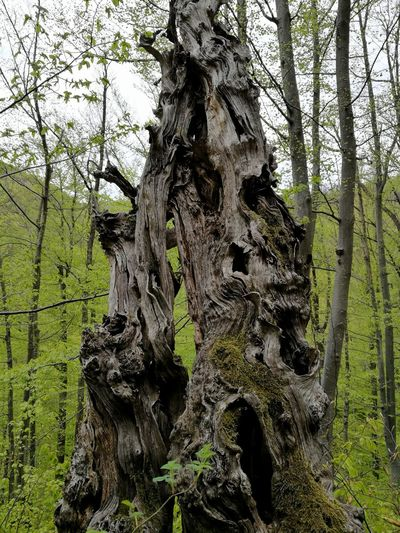 Tree Tree Trunk Day Nature Green Color Growth Outdoors No People Low Angle View Close-up Beauty In Nature Sky Dead Tree
