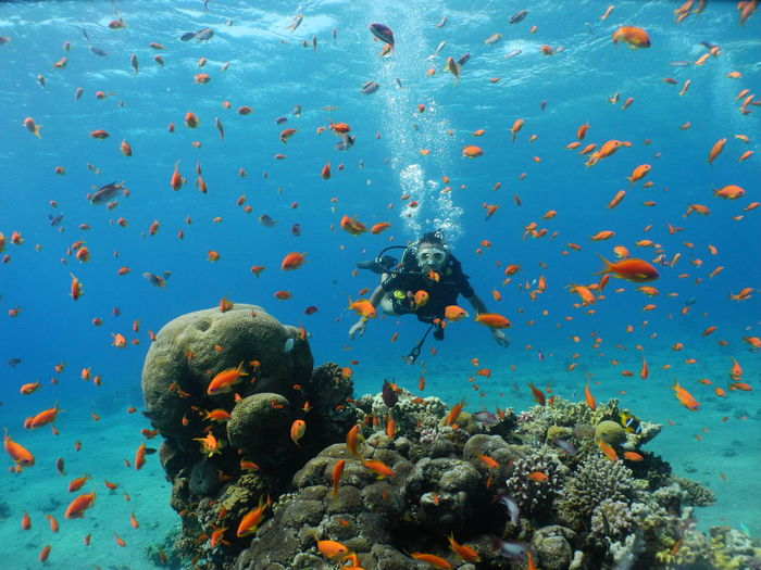 The world of water is full of life Diving Amazing Animal Animal Themes Animal Wildlife Animals In The Wild Coral Fish Gorgeous Group Of Animals Invertebrate Israel Large Group Of Animals Marine Nature No People Outdoors School Of Fish Sea Sea Life Swimming UnderSea Underwater Vertebrate Water