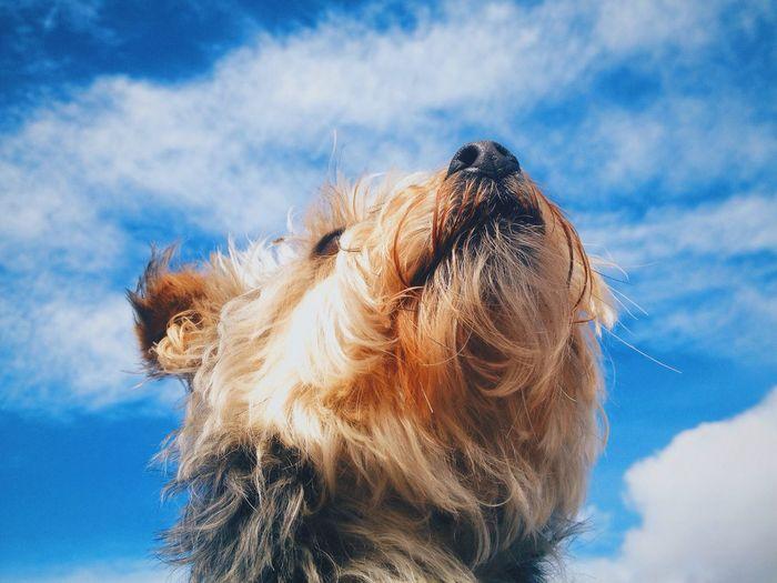 Dog Sky Blue