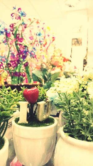 I love you Flower Plant Vase Indoors  Table Home Interior Nature Day Freshness Fragility Flower Head