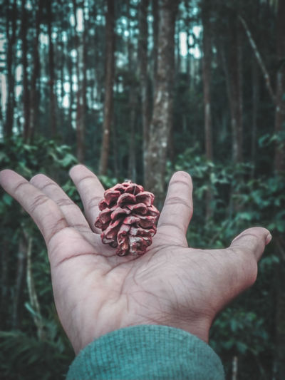 Cropped image of hand holding pine cone against trees at forest