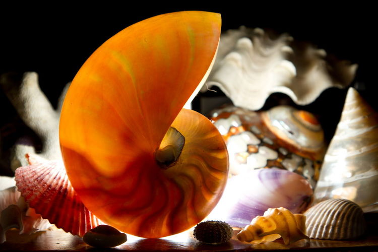 Bestoftheday Close-up Eyeem Sea Focus On Foreground Light Light Painting Light Photography Multi Colored Nature Nature Nature_collection Naturelovers Nautilus Perfection Sea Sea Jewel Sea Shell Seaporn Shell Shellsheddyphotography Still Life