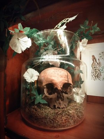 Skull Human Skull Vase Beauty In Death Beauty In Death... Cracked Skull Human Skull Decoration Gothic Decoration Dark Creepy Spooky Death Dead