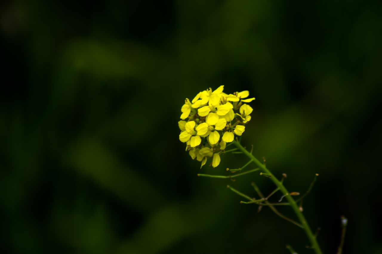 flower, yellow, nature, beauty in nature, growth, plant, fragility, green color, petal, freshness, no people, outdoors, day, flower head, close-up
