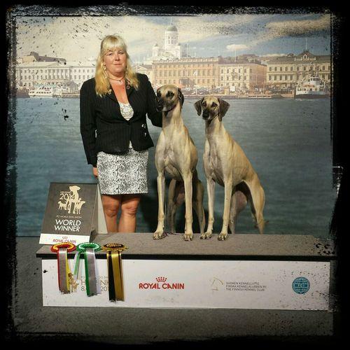 World Dog Show WDS2014FI Sloughi Ghazoot