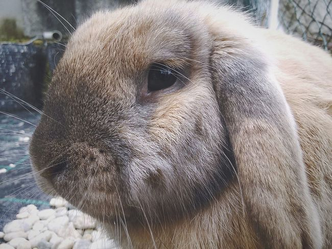 Beby Bunny 🐰 Lovepet Photopets Cute Animals Belier