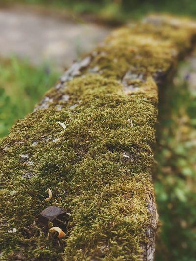 Close-up of lizard on moss