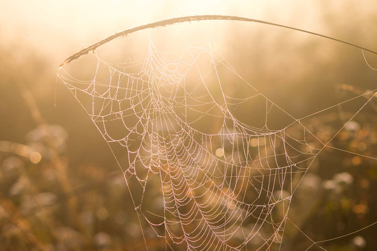Close-up of spider web against blurred background