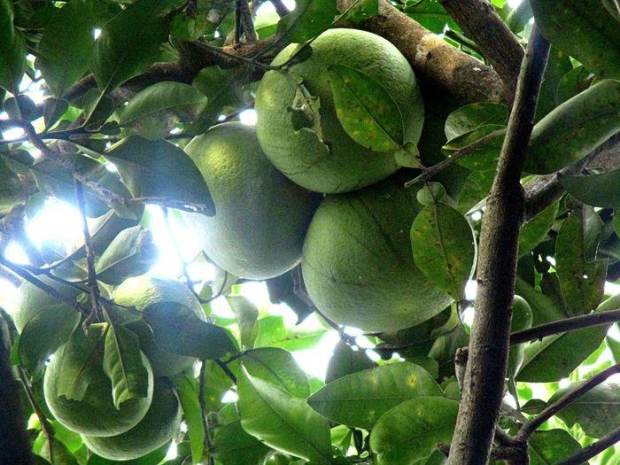 Jeruk Bali Segar Fruit Food No People Healthy Eating Outdoors First Eyeem Photo