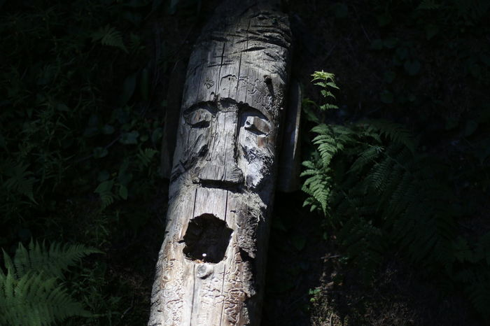 Tree Forest Mountain Simbol Tree Sculpture Pinaceae Close-up Statue Sculpted Woods