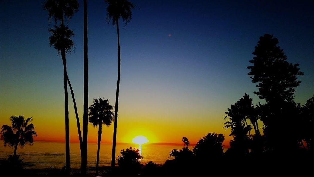 Silouette & Sky Laguna Sunset Being A Beach Bum Silouhette Palm Trees Sunset_collection Amazing Colors Sunsetporn Having Fun :) Sunets